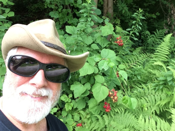 We have a bumper crop of berries on our 12 acres this year, and I was relieved when Dr. Brod agreed to allow me to pick them. I wore big sun glasses to protect my eye from thorny berry branches and glaring sun, as I picked a half-gallon of ripe berries two days after eye surgery.