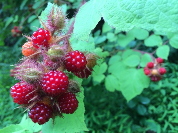 A close-up view of this summer's berries.